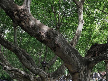 歪脖子树与花痴